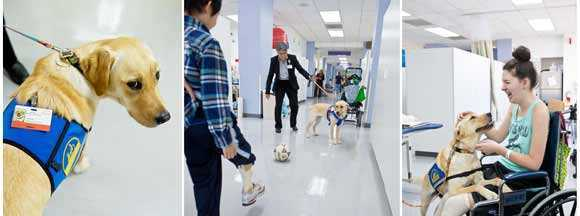 physicial therapy dog, Trinity helps motivate movement and therapeutic progress